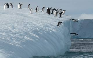Spot penguins in Antarctica