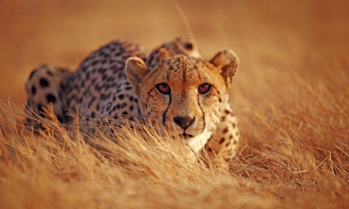 See more African wildlife during the winter months when the grass is shorter