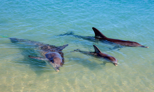 See the friendly bottlenose dolphins at Monkey Mia, Western Australia