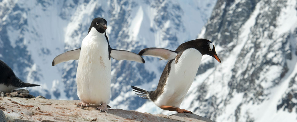 Penguins and their flying neighbours